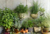 9 Plantas comestibles medicinales