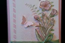 SU : Butterfly Basics