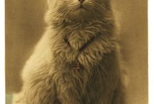 Vintage Animal / by Christopher Hayes
