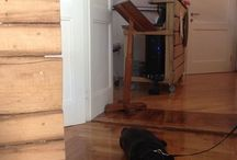 Lobagola 4-legged friends / We're a pet friendly B&B in Zagreb, all dogs are more than welcome!
