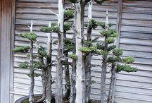 Bonsai and Mini Garden / #garden #hobby #art
