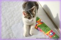 CarpetTherapy for Cats