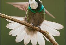 Birds Vogels / vogels en natuur