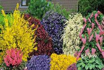 Flowering Bushes / by Cheryl Yacovoni