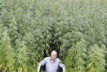 Zábavné obrázky / http://www.semena-marihuany.cz/cs/articles/11-novinky-o-konopi-marihuane