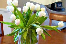 Flowers / Tulips