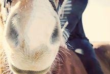 Horses pic