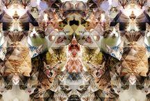 Stuff We Love / by Modern Cat