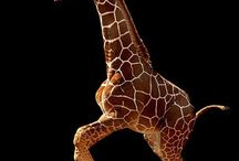 African Animals / Part of the animal world we should appreciate. / by Eunice Luscombe