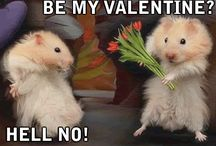 Cute hammys / Cute hamster pictures