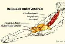 sport/exercices
