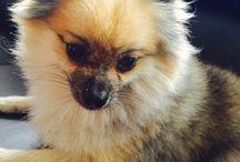 Бруно / О моей чудо-собаке БРУНО