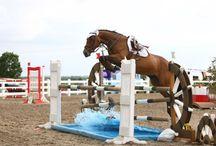 horse:))