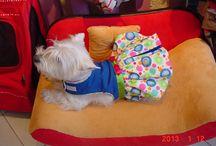 Sofás para perros / Nuestros diferentes modelos de sofás probados por nuestros mas apreciados clientes