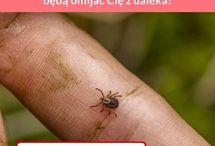 Kleszcze komary