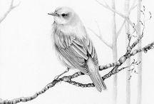 Canary my love