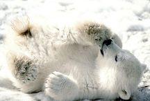 Polar Bears stuff