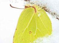 Mariposas / Estos pequeños insectos que tienen mil armas de supervivencia