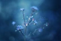 blue love / by Carolyn Egerszegi