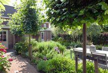 Romantische tuin / Centraal in deze tuin is de smalle vijver in het verlengde van de openslaande deuren. Optisch van binnenuit gezien, lijkt het alsof de woning de vijver naar binnen haalt. Een verscheidenheid aan weelderige en langbloeiende planten rondom de vijver met hoge niet te breed wordende bomen zorgen voor intieme en romantische sferen.