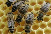 Glory Bees
