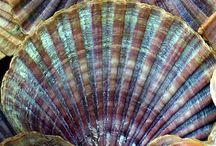 seashell collecting