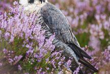 falcons / by Brenda Johnson