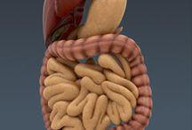 Austin Digestive System