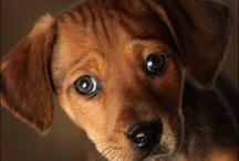 Cute Doggies !!