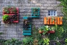 Gardening / by Jill Bryant