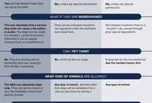 Animal jobs