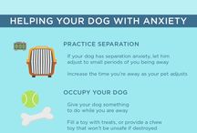 Pet Health / Things Related to Pet Health and Wellness
