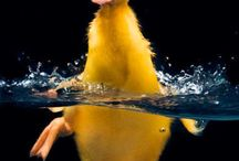 Ducks are one of my faves!