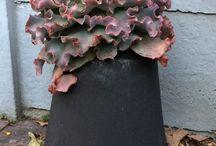 Small Plant Pots, Vases & Bowls / Cast cement concrete pots, vases and bowls