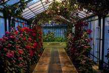 Dreaming of Greenhouses ~ / Greenhouses, Conservatories, & Sheds / by Angel