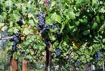 To Sip / Showcasing the wines of the Verde Valley Wine Trail
