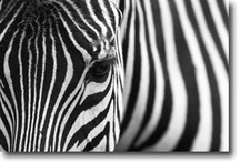 Zebras & Other Stuff I Like! / by Dean Davis