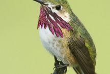 kolibríky a iné farebné