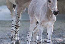 Biodiversity + Equine species