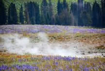 Yellowstone!! / by Merv Knox