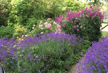 Favorit garden
