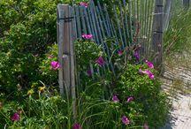 Wild Beach gardens
