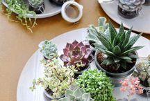 Plants / by Kayla Henness