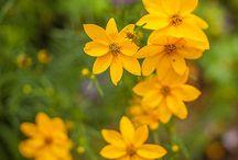 Flores y jardinería / Flores
