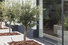 Krekeltuin terras-tuin vooraan