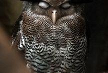 Owlie & Co