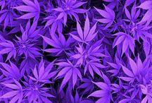 • « 1, 2, 3 Alice smoke the weed »