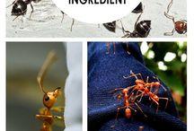 Mosquito spray/Pests