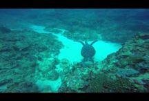 Sea Activities in Mauritius