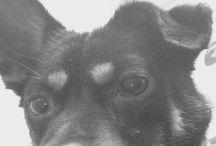 Ariana's dogs